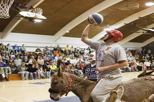 Szamár kosárlabda
